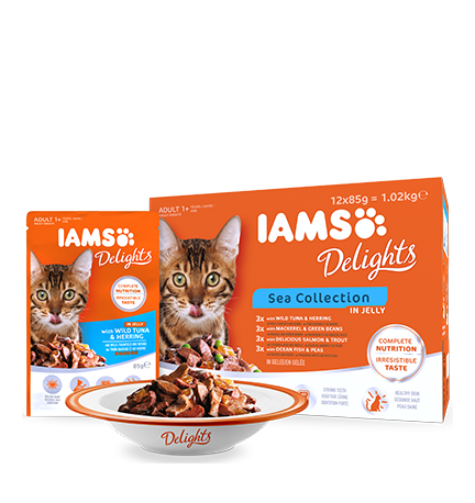 IAMS Delights Sea Collection in Jelly